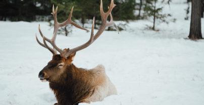 Wildlife & Ski Experience
