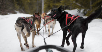 5 onvergetelijke winteravonturen in Jasper National Park