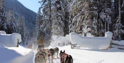 Winter Adventure Jasper